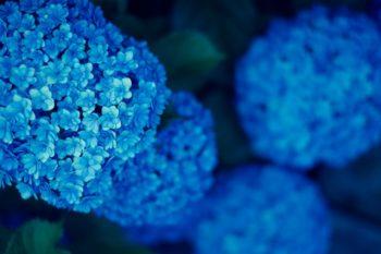 梅雨 紫陽花 メンテナンス点検