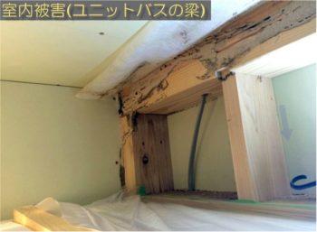 呉市 シロアリ 室内被害