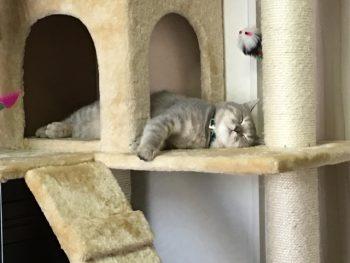 ①キャットタワーと猫