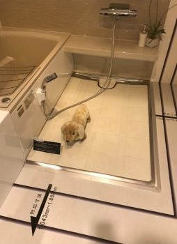呉市 お風呂リフォーム ペット 犬