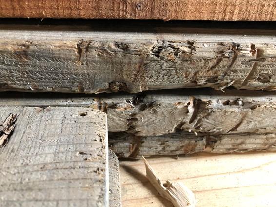 見えにくい木材劣化への対策方法とは?